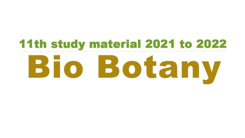 11th Bio Botany study material 2021 to 2022