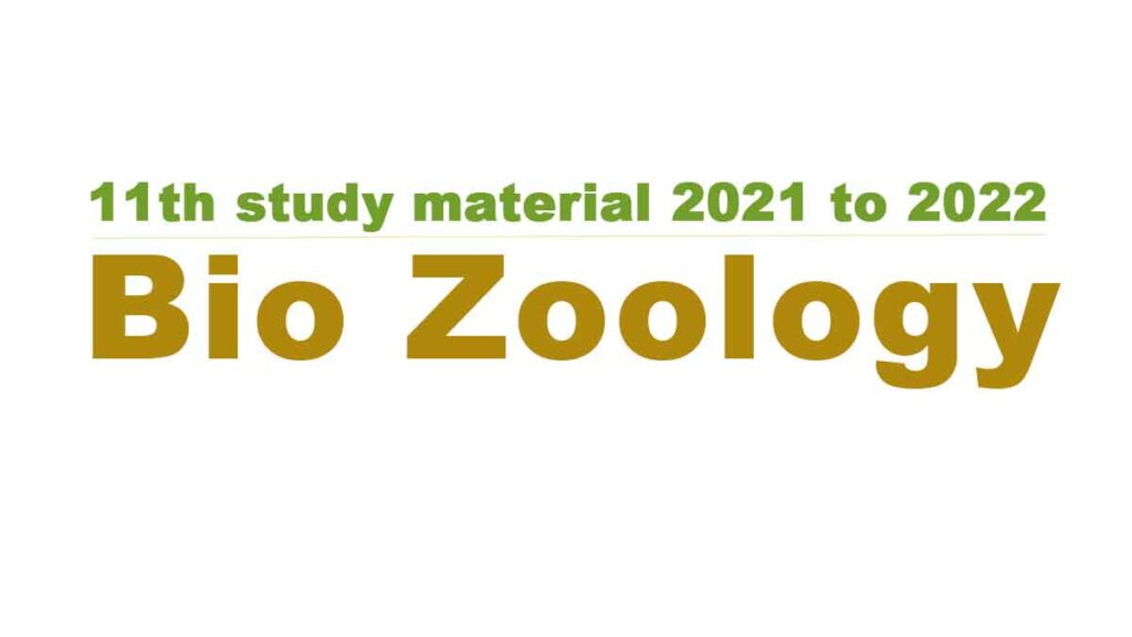 11th Bio Zoology study material 2021 to 2022